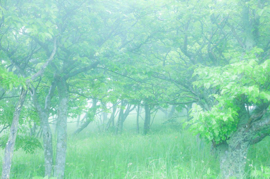 深層心理と森のイメージ
